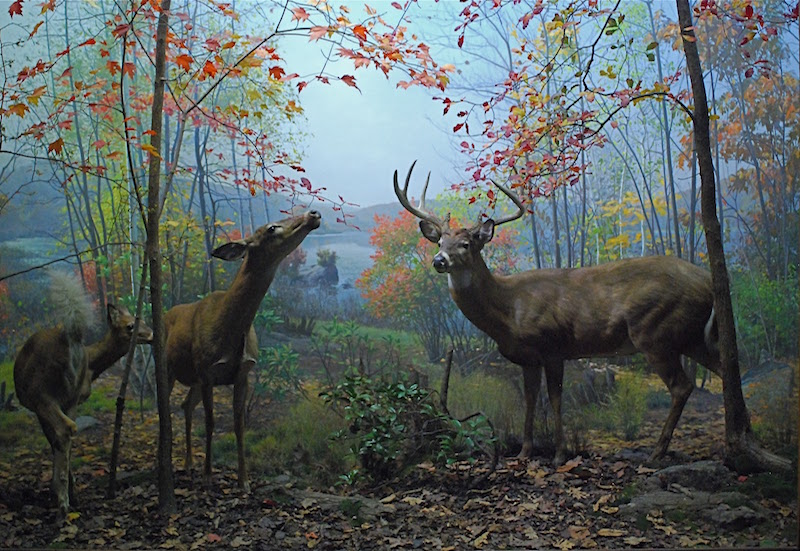 American Museum of Natural History. Dioramas North American Hall